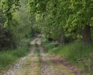 Etwa 200 Jahre alter Weg von Strasburg (Uckermark) nach Carolinenthal